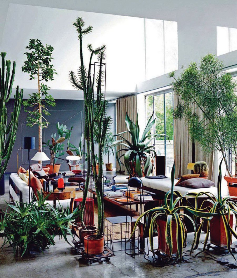 Apartment plants for Living room with indoor plants